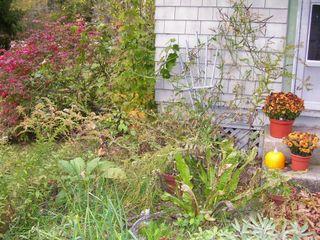10-22 garden 2