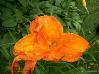8-4 orange