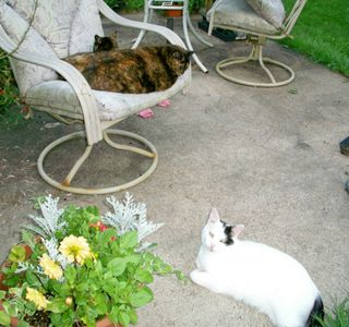 8-4 cat harmony