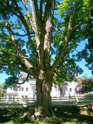 9-11 shaker tree