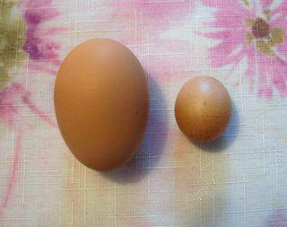 4-25 eggs