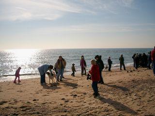 1-1 beach w dogs