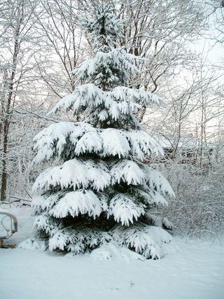 1-8 snowy tree
