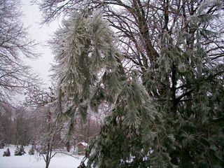 2-2 icy tree