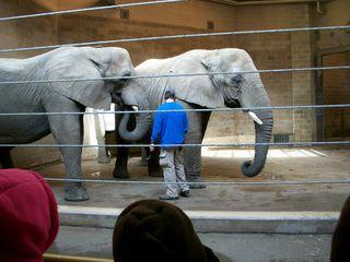 11-23 elephants