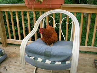 6-12 pip chair