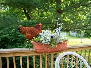 6-12 gardening pip