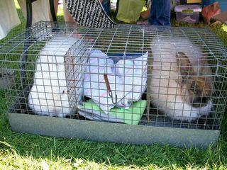 5-18 bunnies