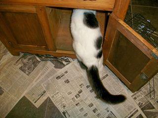 9-18 c nosy cat back