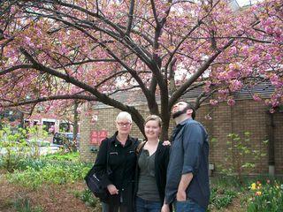 Cherry tree trio