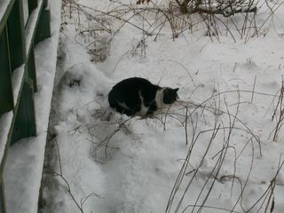 6-5 Tuffy in snow