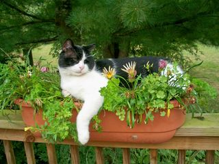 9=28 Tuffy in flowerbox