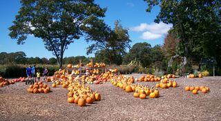 10-7 pumpkins