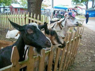 10-13 4 goats