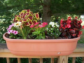 7-19 flowerbox 2