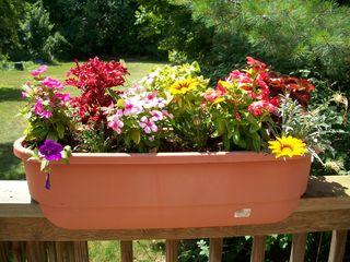 7-19 flowerbox 1
