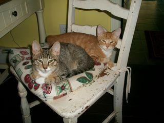 7-31 kitties