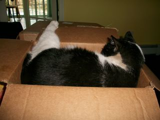 2-11 Tuffy in box back