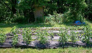 6-24 garden