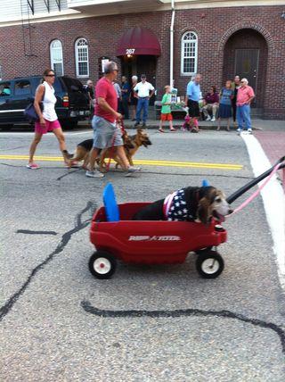 7-17 dog in wagon