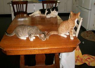 8-8 3 cats