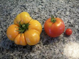 8-16 tomatoes
