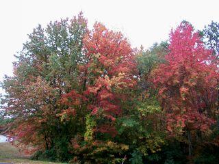 10-7 trees 2