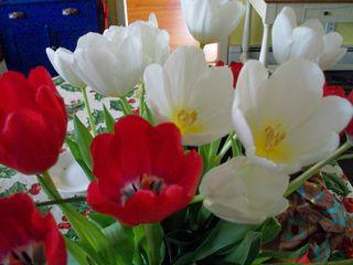 12-21 tulips