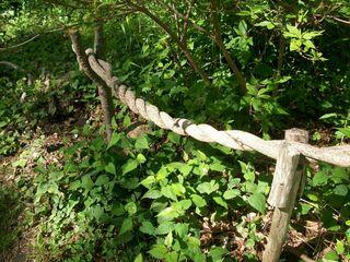 6-5 vine fence 1