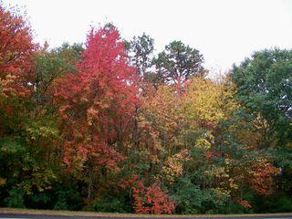 10-7 trees 3