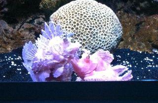 7-19 funny fish
