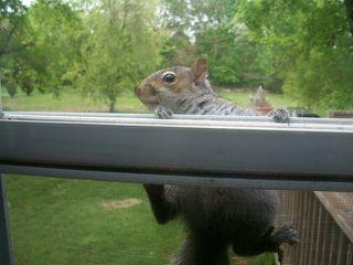 5-15 squirrel 3