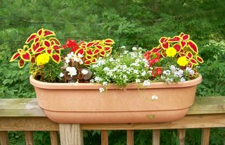 7-4 flowerbox 1
