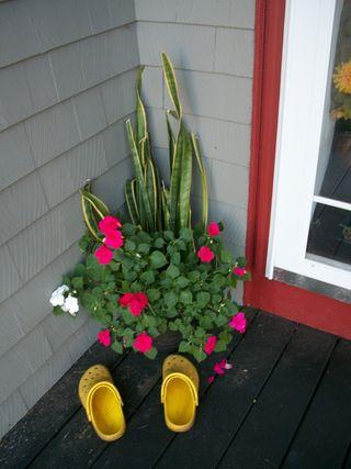 9-21 plants