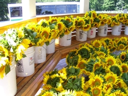 Fri_sunflower_buckets
