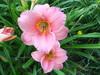 Wed_725_lilies_garden_002