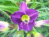 Wed_725_lilies_garden_004