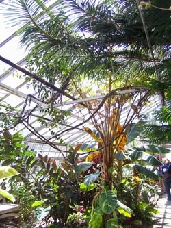 Sat_greenhouse1