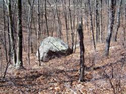Sat_rock_trees