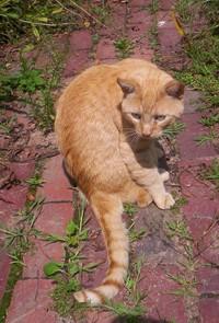 Cat2_1