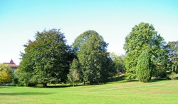 Sat_green_trees