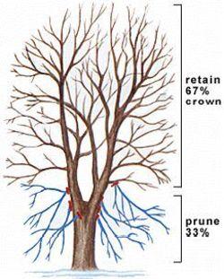 Sat_pruning